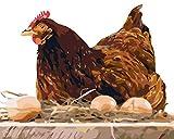 Stickerei-Starter-Set-Hen lays Eggs-Kreuzstich-Set mit Möbelnähen handgefertigt Stickerei Ornament 40x50cm (11CT Vorgedruckte Leinwand)